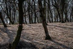 Hoia Baciu - преследовать лес, Румыния стоковые изображения rf