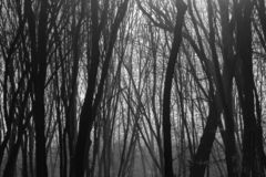 Hoia Baciu Forest - World Most Haunted Forest with a reputation for many intense paranormal activity and unexplained events. Inside Hoia Baciu Haunted Forest stock image