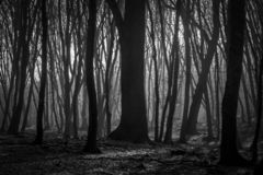 Hoia Baciu Forest - World Most Haunted Forest with a reputation for many intense paranormal activity and unexplained events. Inside Hoia Baciu Haunted Forest stock images