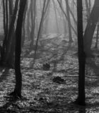 Hoia Baciu Forest - World Most Haunted Forest with a reputation for many intense paranormal activity and unexplained events. Inside Hoia Baciu Haunted Forest royalty free stock photo