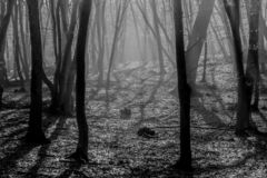 Hoia Baciu Forest - World Most Haunted Forest with a reputation for many intense paranormal activity and unexplained events. Inside Hoia Baciu Haunted Forest stock photo