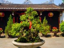 HOIAN, WIETNAM, WRZESIEŃ, 04 2017: Piękny drzewo w garnku w patiu przy świątynią w hoian Wietnam Fotografia Royalty Free