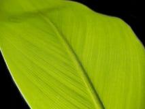 Hoja [1] Imagen de archivo libre de regalías