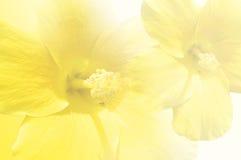 Hoja Imagen de archivo libre de regalías
