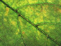 Hoja abstracta del árbol del detalle del ejemplo imagen de archivo