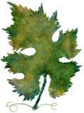 Hoja aislada de la vid del otoño de la acuarela (Highres) Foto de archivo libre de regalías