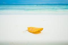 Hoja amarilla Foto de archivo libre de regalías