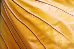 Hoja amarilla Fotos de archivo