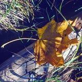 Hoja amarilla Imagenes de archivo
