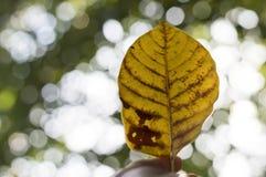 Hoja amarilla Fotografía de archivo libre de regalías