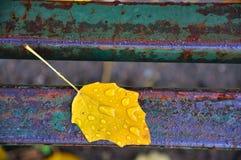 Hoja amarilla caida en un banco foto de archivo