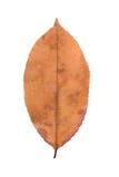 Hoja amarilla como símbolo del otoño Imágenes de archivo libres de regalías