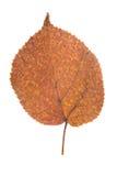 Hoja amarilla como símbolo del otoño Imagen de archivo libre de regalías