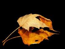 Hoja amarilla con su reflexión Imagenes de archivo