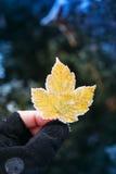 Hoja amarilla congelada en mano del hombre de la aventura Imágenes de archivo libres de regalías