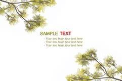 Hoja amarilla de la textura, arbusto Imágenes de archivo libres de regalías
