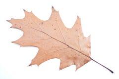 Hoja amarilla del otoño fotografía de archivo