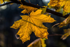 Hoja amarilla del otoño Imagen de archivo libre de regalías