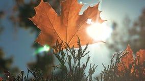 Hoja amarilla del otoño en el sol metrajes