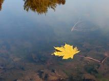Hoja amarilla en agua del lago Imagen de archivo