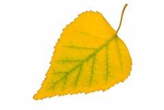 Hoja amarilla en blanco   Fotografía de archivo libre de regalías