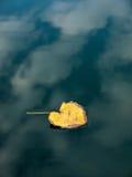 Hoja amarilla en charco Foto de archivo libre de regalías