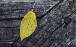 Hoja amarilla en superficie de madera Fotos de archivo