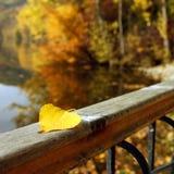Hoja amarilla en un día asoleado de otoño fotografía de archivo