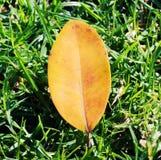 Hoja amarilla en una hierba Fotografía de archivo libre de regalías