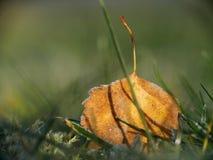 Hoja amarilla en una hierba, foco muy bajo del otoño Imagenes de archivo