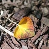 Hoja amarilla hermosa del árbol en la tierra imagen de archivo libre de regalías