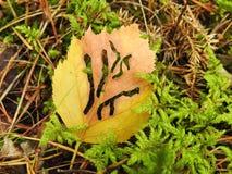 Hoja amarilla hermosa en el musgo con los agujeros de gusano, Lituania Foto de archivo libre de regalías
