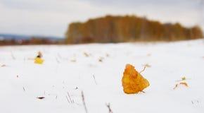 Hoja amarilla muerta sola en bosque fresco de la nieve y del telecontrol Imagenes de archivo