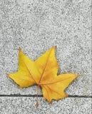 Hoja amarilla sobre las horas punta en el otoño, 2018 fotografía de archivo