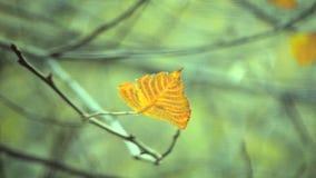 Hoja amarilla y marrón en ramas en la estación otoñal del árbol almacen de video