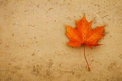 Hoja anaranjada del mapple en la arena Foto de archivo libre de regalías