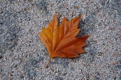 Hoja anaranjada del otoño foto de archivo libre de regalías