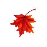 Hoja anaranjada del otoño Imágenes de archivo libres de regalías