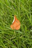 Hoja anaranjada en el campo Fotografía de archivo libre de regalías