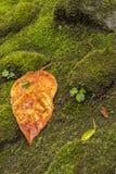 Hoja anaranjada en musgo verde Fotos de archivo