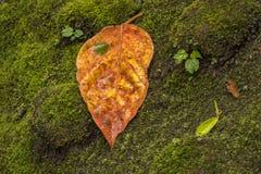 Hoja anaranjada en musgo verde Imagen de archivo libre de regalías