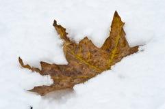 Hoja anaranjada en nieve Imagen de archivo