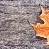 Hoja anaranjada mojada Fotos de archivo libres de regalías
