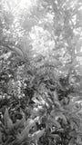 Hoja blanco y negro imagen de archivo