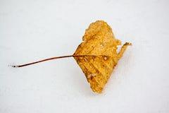 Hoja caida amarillo en la nieve Fotos de archivo libres de regalías