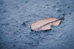 Hoja caida en la lluvia Fotos de archivo