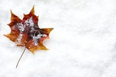 Hoja caida en la nieve Imagen de archivo