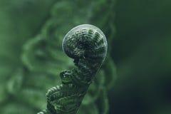 Hoja cerrada del helecho en un fondo verde, concepto de vida imagenes de archivo