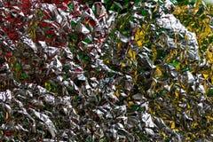 Hoja coloreada Fotografía de archivo libre de regalías