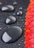 Hoja colorida Imagenes de archivo